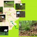 Pröpflinge im Biotop