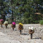 Pine cone blossom
